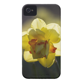 Daffodil iPhone 4/4S Case-Mate Barely There Case-Mate iPhone 4 Case