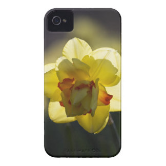 Daffodil iPhone 4/4S Case-Mate ID Case iPhone 4 Case-Mate Case