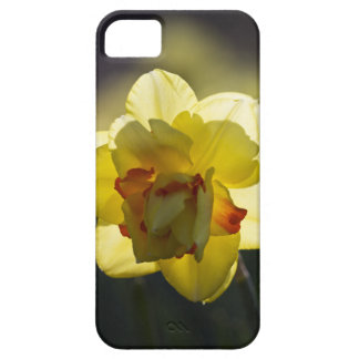 Daffodil iPhone 5 Case-Mate Barely There iPhone 5 Case