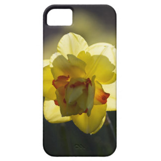 Daffodil iPhone 5 Case-Mate ID Case