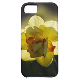 Daffodil iPhone 5 Case-Mate Tough
