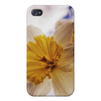 Daffodil iPhone 4 Cases