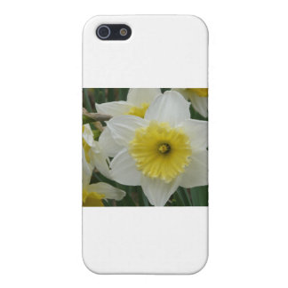 daffodil cases for iPhone 5