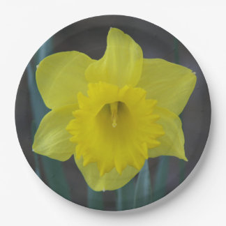 Daffodil, Paper Plates. Paper Plate