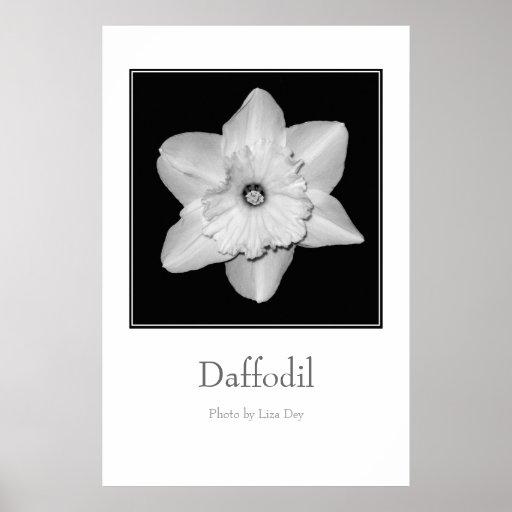 'Daffodil' Poster