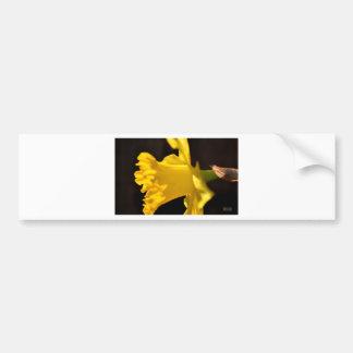 Daffodil Profile Bumper Sticker