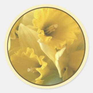 daffodil seal