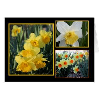 Daffodil Trio Card