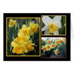Daffodil Trio Greeting Cards