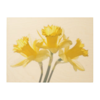Daffodil Trio On Wood Wood Canvases