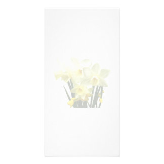 Daffodils and Buds Photo Cards