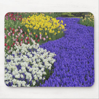 Daffodils and Grape Hyacinth, Keukenhof 2 Mouse Pad