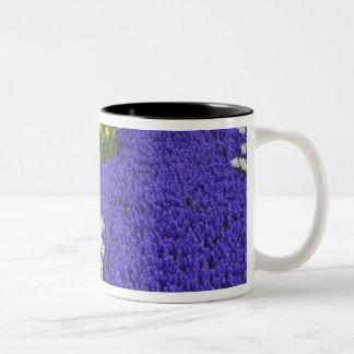Daffodils and Grape Hyacinth, Keukenhof 2 Two-Tone Coffee Mug