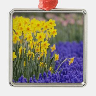 Daffodils and Grape Hyacinth, Keukenhof 3 Christmas Ornament
