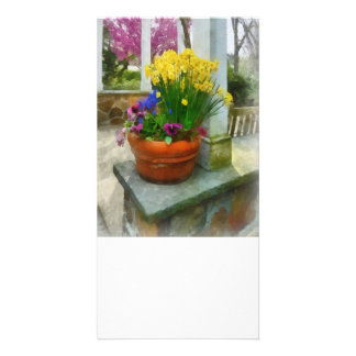 Daffodils and Pansies in Flowerpot Photo Cards