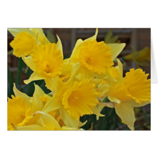 Daffodils Stationery Note Card