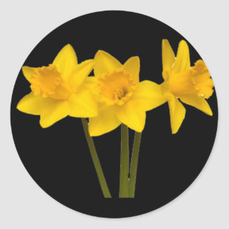 """Daffodils"" Classic Round Sticker"