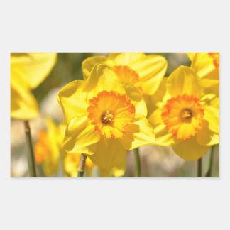 Daffodils Close Up Macro Photograph Rectangular Sticker