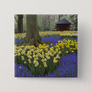 Daffodils, grape hyacinth, and tulip garden, 15 cm square badge