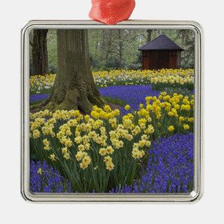 Daffodils, grape hyacinth, and tulip garden, Silver-Colored square decoration