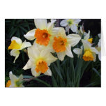 Daffodils Greeting Cards
