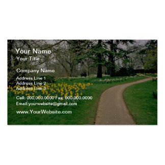 Daffodils in Magdalen's extensive gardens  flowers Pack Of Standard Business Cards
