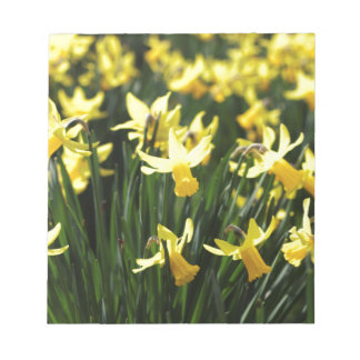 Daffodils in Spring Notepad