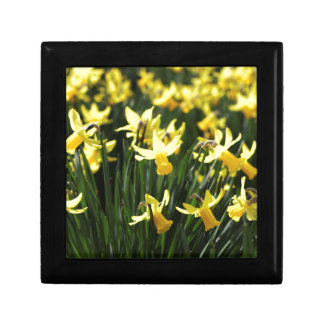 Daffodils in Spring Small Square Gift Box