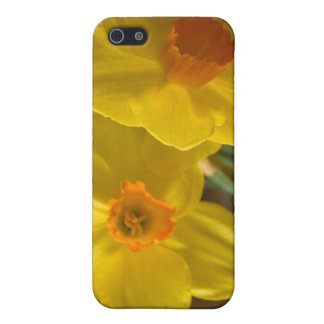 Daffodils Covers For iPhone 5