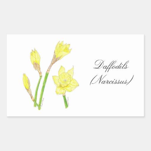 Daffodils (Narcissus) Botanical Seal Rectangular Sticker