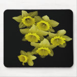 Daffodils On Black Mouse Pads