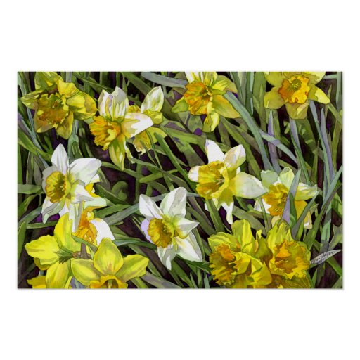 Daffodils Poster Print