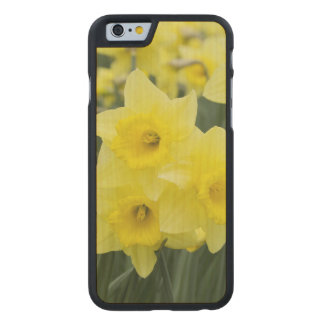 Daffodils RF) Carved® Maple iPhone 6 Case