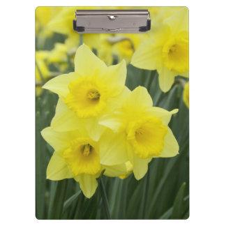 Daffodils RF) Clipboard