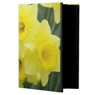 Daffodils RF) iPad Air Cases
