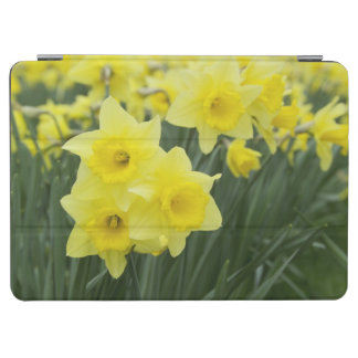 Daffodils RF) iPad Air Cover