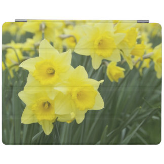 Daffodils RF) iPad Cover