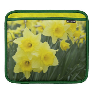 Daffodils RF) iPad Sleeves