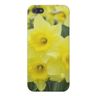 Daffodils RF) iPhone 5/5S Case