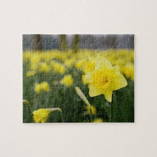 Daffodils (RF) Jigsaw Puzzle