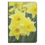Daffodils RF) Kindle 4 Cover