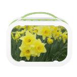 Daffodils RF) Lunchboxes