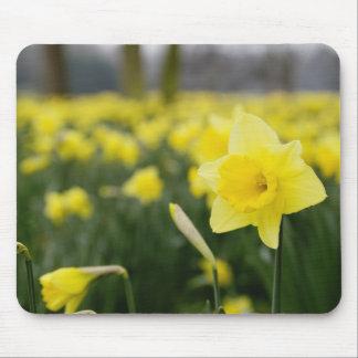 Daffodils (RF) Mouse Pad