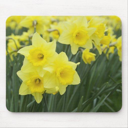 Daffodils RF) Mousemat