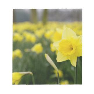 Daffodils (RF) Notepad