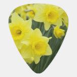 Daffodils RF) Plectrum