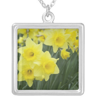 Daffodils RF) Silver Plated Necklace