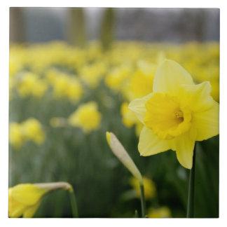 Daffodils (RF) Tile