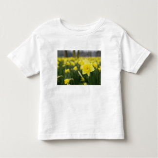 Daffodils (RF) Toddler T-Shirt