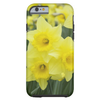 Daffodils RF) Tough iPhone 6 Case